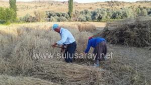 sulusaray-ekin-bicme(2)