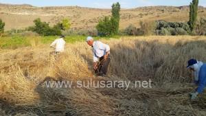 sulusaray-ekin-bicme(5)