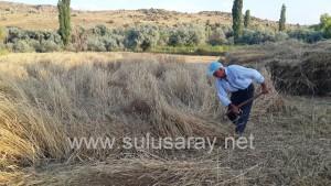 sulusaray-ekin-bicme(6)